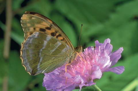 FloraogFauna – Blomsternavn2-BOK